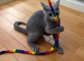 Cat Toy Review Guide