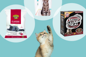 cat-litter-review